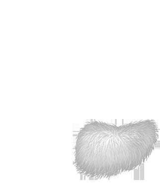 Adopte un(e) Furet Cromimi