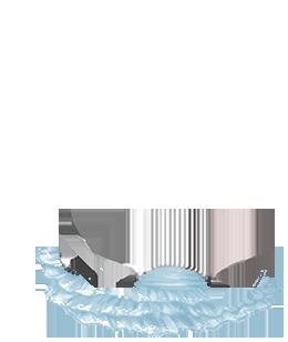 Adopte un(e) Hamster Crominavi