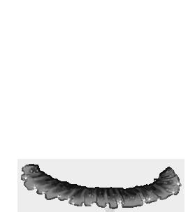Hamster Beemoov