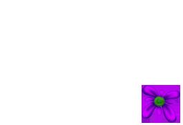 Adopte un(e) Lapin Printemps