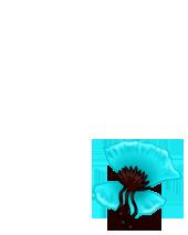 Adopte un(e) Lapin Bleu Pastel