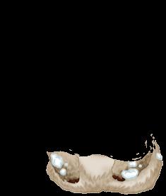 Adopte un(e) Souris Blanche