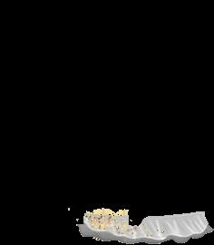 Adopte un(e) Souris Chauve-Souris