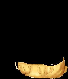 Adopte un(e) Souris Choco