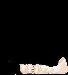 Adopte un(e) Souris Noire