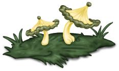 Champignon Herbe Forêt Enchantée