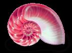 Coquillage escargot