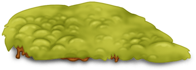 Herbe Plante