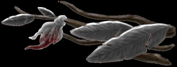 Branches Bateau Fantôme