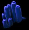 Algues marines 2
