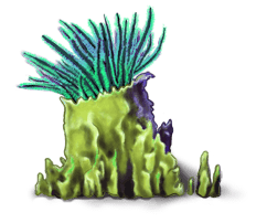 Algues marines 4