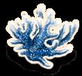Algues marines 3
