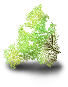 Algues marines 5