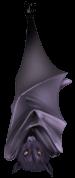 Chauve Souris Vampire