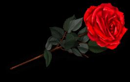 Rose Pianiste