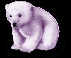 Ours Fée de l'hiver