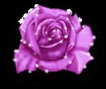 Rose Fée de l'hiver