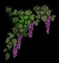 Fleur Elfe