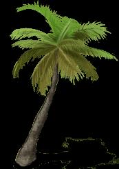 http://s6.cromimi.com/images//produits/palmiers/01.png