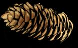 Pigne de pain
