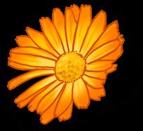 Grande Marguerite