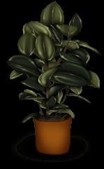 Plante Rentrée