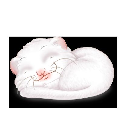 Adopte un(e) Furet Blanc