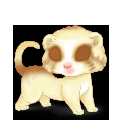 Adopte un(e) Furet Blondy