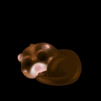 Adopte un(e) Furet Chocolat