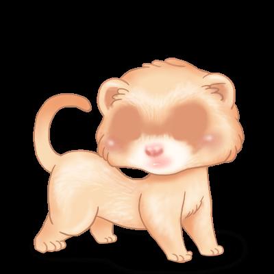 Adopte un(e) Furet Crème Albinos