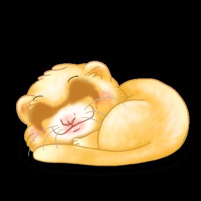 Adopte un(e) Furet Soleil