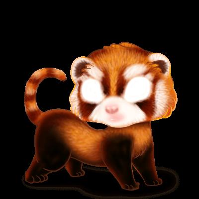 Adopte un(e) Furet Panda Roux