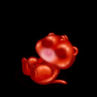 Adopte un(e) Furet Spicy