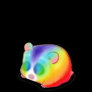 Hamster Arc-en-Ciel