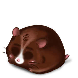Adopte un(e) Hamster Choco