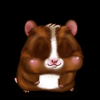 Adopte un(e) Hamster Chocolat au lait