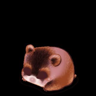 Adopte un(e) Hamster Cromimi