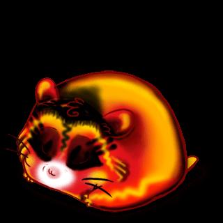 Adopte un(e) Hamster Dragon Chinois