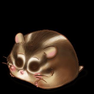 Hamster Ecureuil