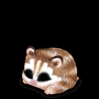 Adopte un(e) Hamster Husky Marron