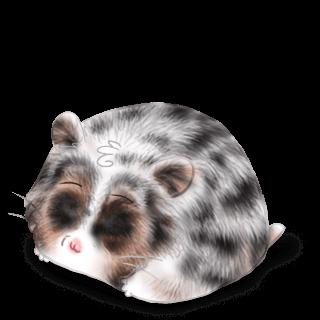 Adopte un(e) Hamster Iona