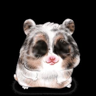 Hamster Iona
