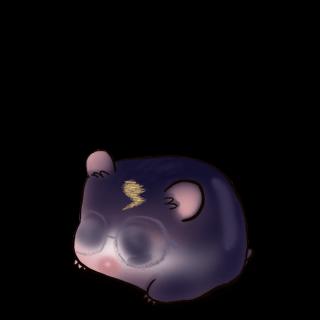 Adopte un(e) Hamster Magic