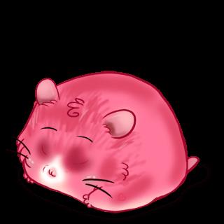 Adopte un(e) Hamster Boréale