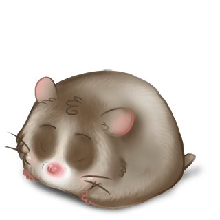 Adopte un(e) Hamster Roborovski