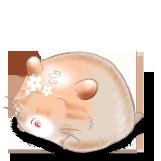 Adopte un(e) Hamster Hamster Etrange