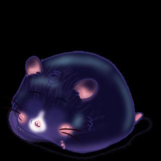 Adopte un(e) Hamster Rock