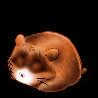 Adopte un(e) Hamster Roux