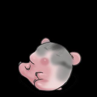 Adopte un(e) Hamster Russe