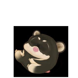 Adopte un(e) Hamster Shiba Inu